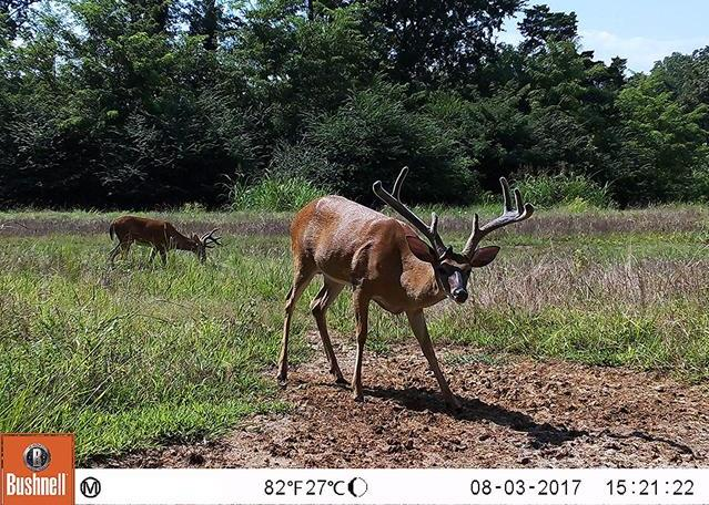 Best No Glow Infrared Trail Camera Reviews