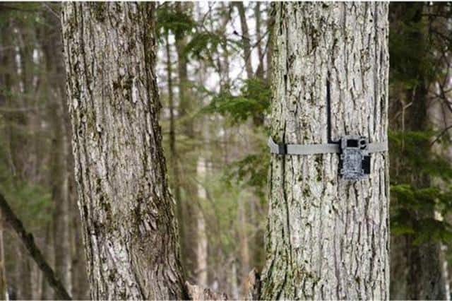 Spypoint Link Micro 4G Cellular Trail Camera 2020