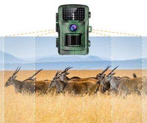 Best Motion activated Wildlife Cameras