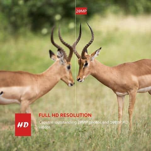 Best Wildlife Cameras Motion Activated