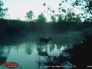 How To Set Up Wildgame Innovations Trail Cameras